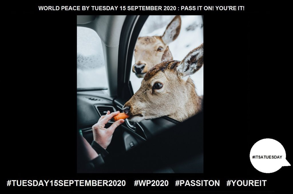 Giving-Providing Emotional Support-47 of 65-WORLD PEACE ON Tuesday 15 September 2020
